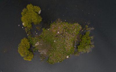 Måkeholmen i Mosvatnet – en suksesshistorie