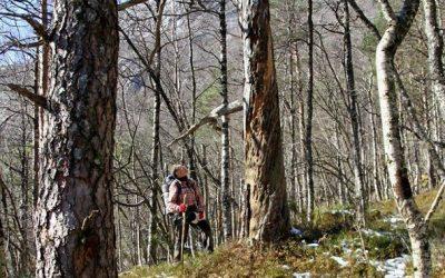 Øvre del av Skurvedalen i Lysefjorden er vernet som skogreservat!
