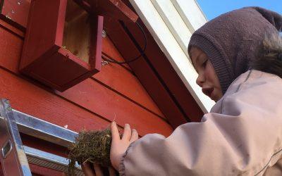 Nå er tiden for å rengjøre fuglekasser